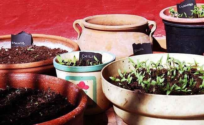 macetas de plantas aromáticas
